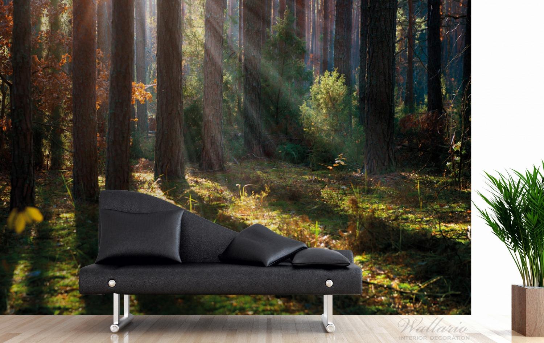 Vliestapete Sonnenstrahlen im Herbstwald – Bild 3