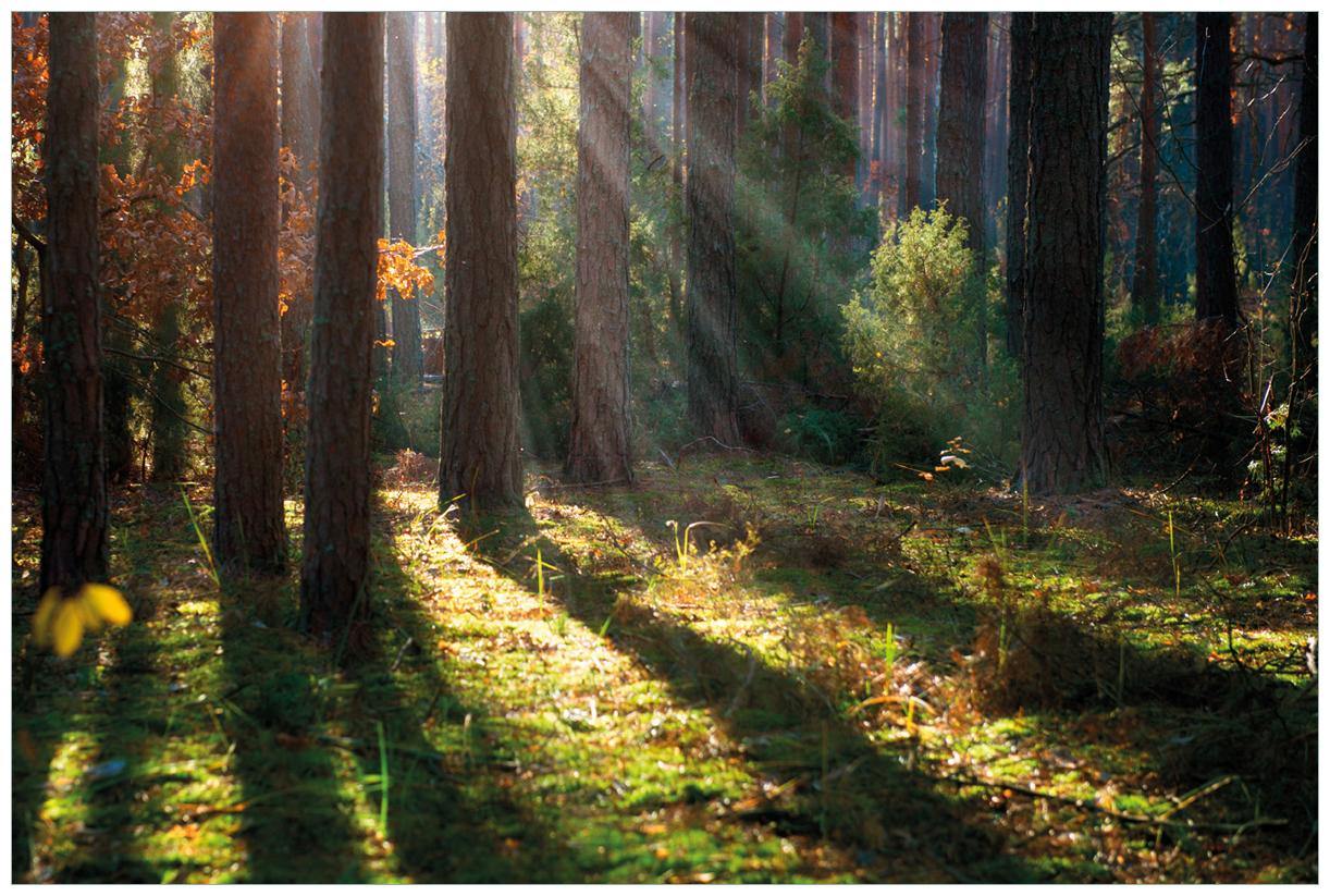 Vliestapete Sonnenstrahlen im Herbstwald – Bild 1