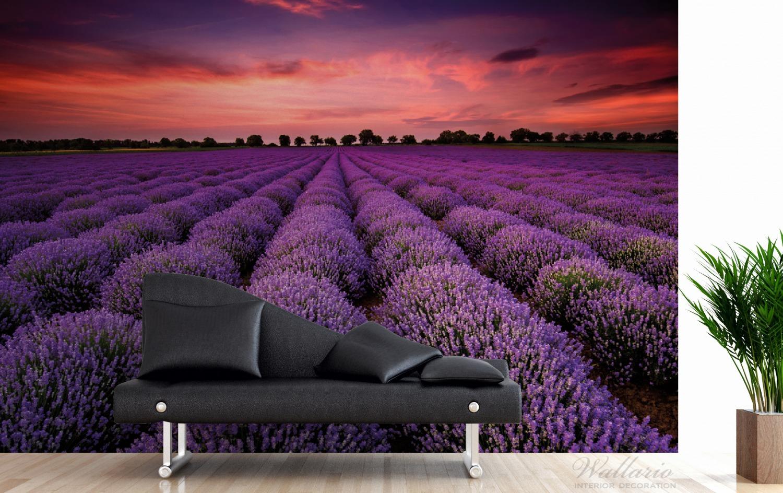 Vliestapete Lavendelfeld unter rotem Himmel – Bild 3