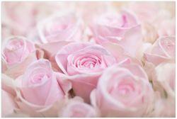 Vliestapete Rosafarbene Rosenblüten im Strauß – Bild 1