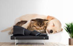 Vliestapete Katze und Hund in Harmonie - Kuschelnde Tiere – Bild 3