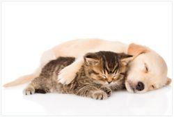 Vliestapete Katze und Hund in Harmonie - Kuschelnde Tiere – Bild 1
