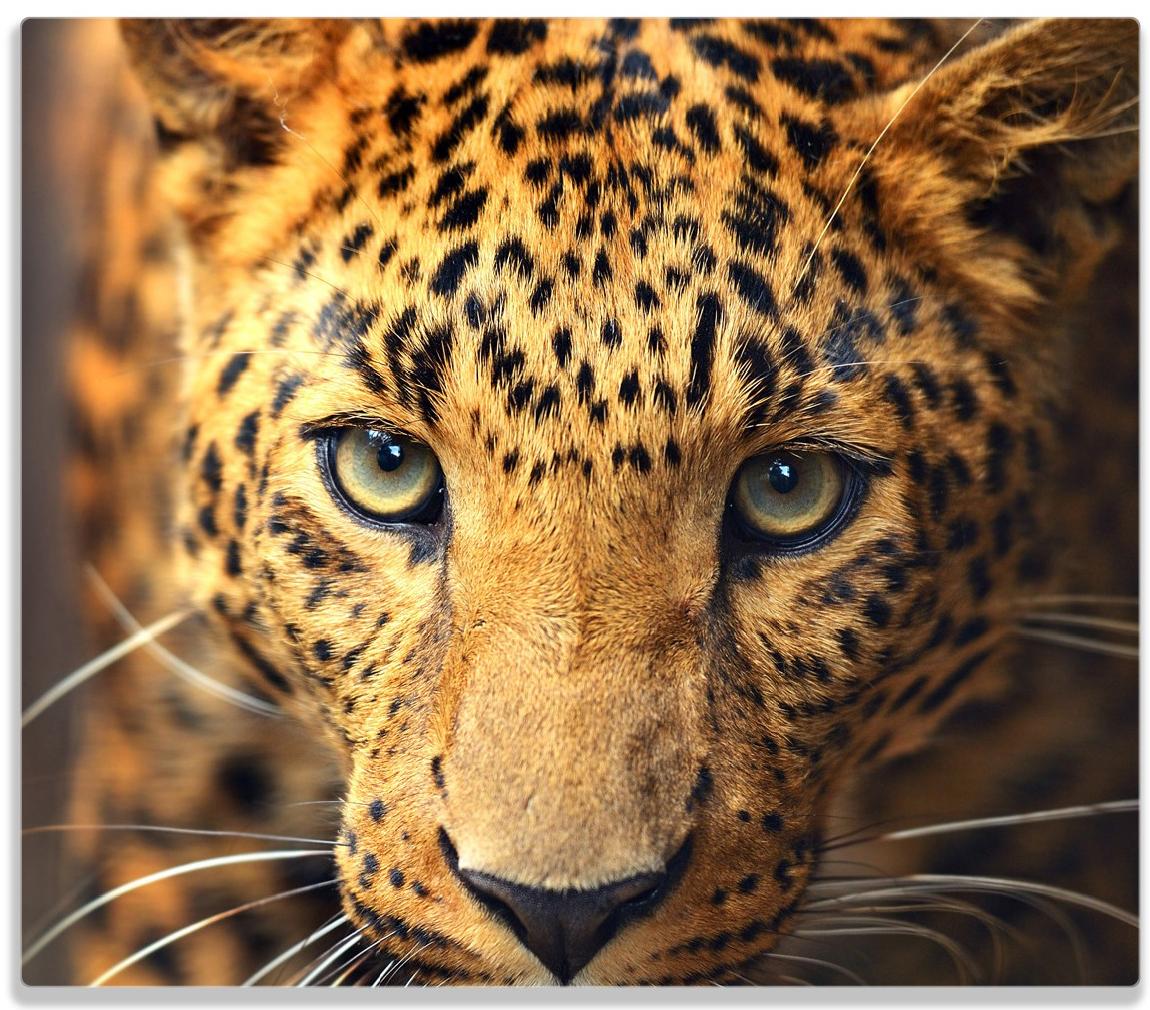 Herdabdeckplatte Leopard in Nahaufnahme bein Laufen – Bild 1