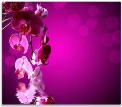 Herdabdeckplatte Rosafarbene Orchidee  Blüten in pink – Bild 1