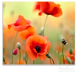 Herdabdeckplatte Mohnblumenblüten – Bild 1