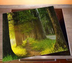 Herdabdeckplatte Allee bei Sonnenuntergang – Bild 2