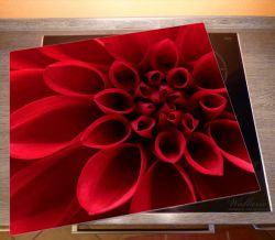 Herdabdeckplatte Rote Dahlienblüte in Nahaufnahme – Bild 2