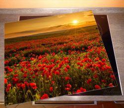 Herdabdeckplatte Mohnblumenwiese bei Sonnenuntergang am Abend – Bild 2