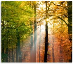 Herdabdeckplatte Sonnenuntergang im Herbstwald – Bild 1