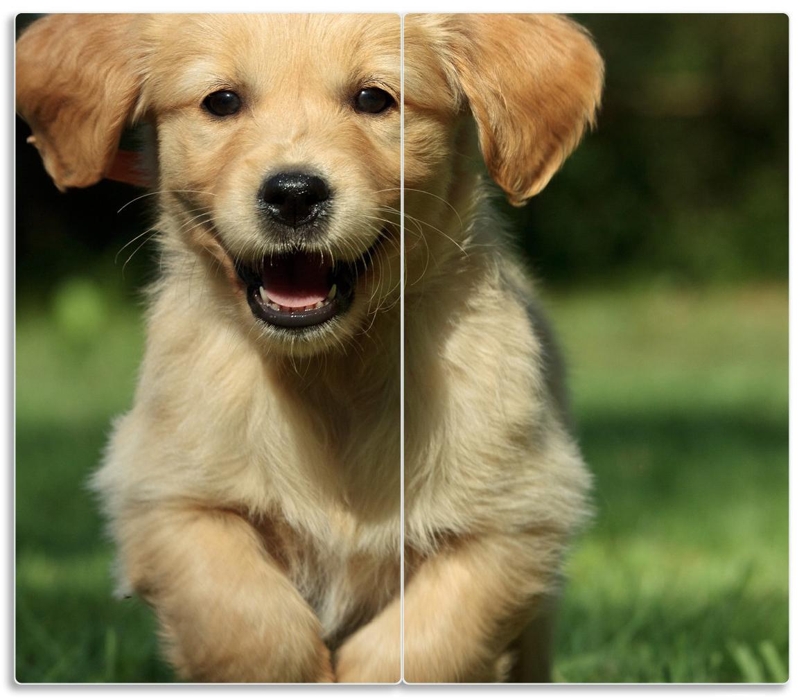 Herdabdeckplatte Süßer Hund - Golden Retriever – Bild 1