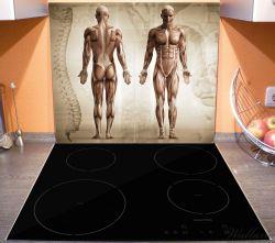 Herdabdeckplatte Anatomie Mensch I – Bild 3