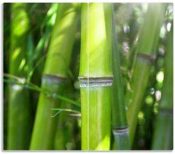 Herdabdeckplatte Bambus im Sonnenschein – Bild 1