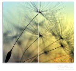 Herdabdeckplatte Samen der Pusteblume in Nahaufnahme vor blauem Himmel – Bild 1