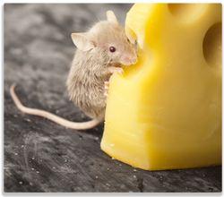 Herdabdeckplatte Süße Maus knabbert an einem Käse in der Küche – Bild 1
