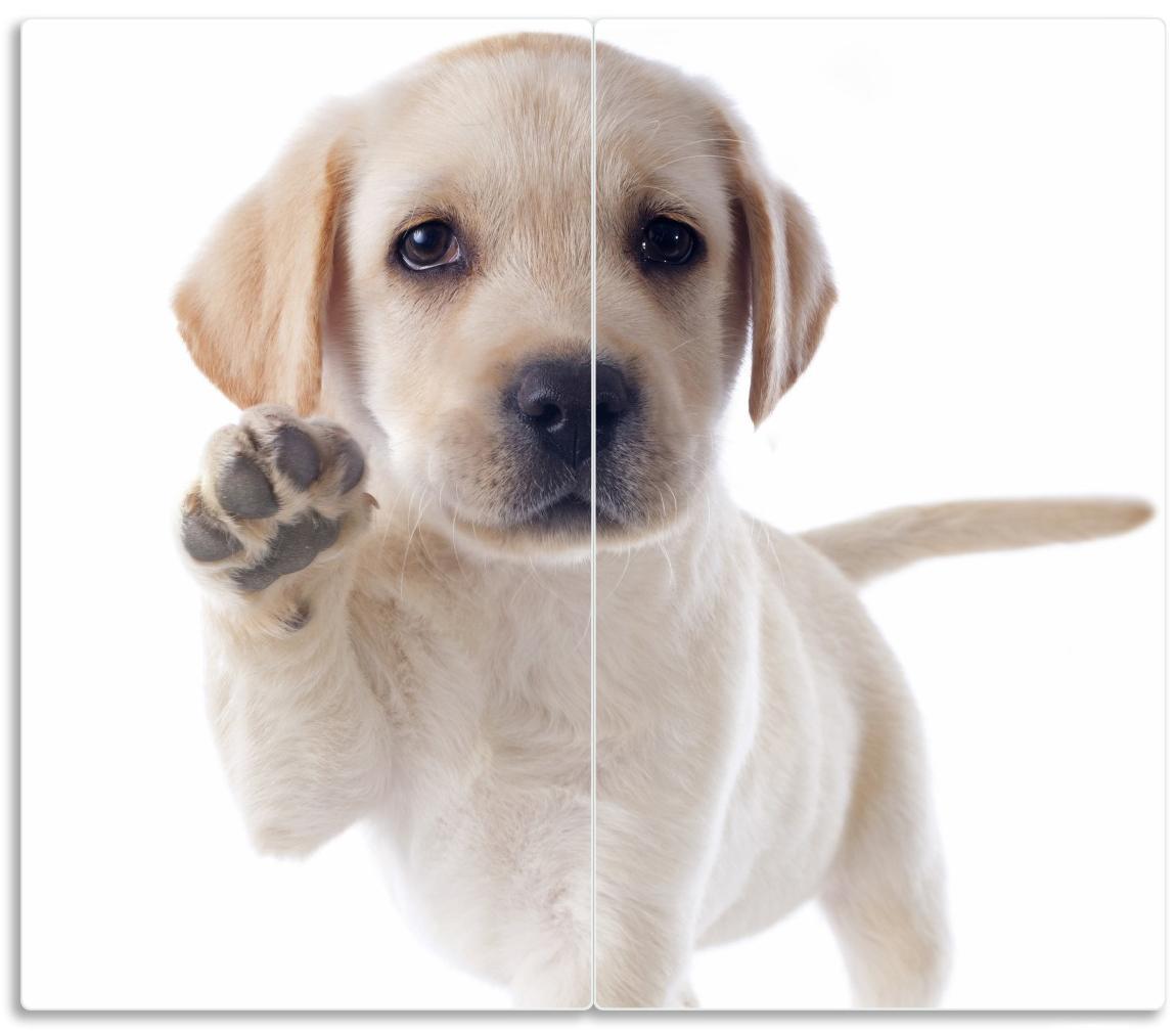Herdabdeckplatte Süßer Labrador-Welpe sagt Hallo – Bild 1