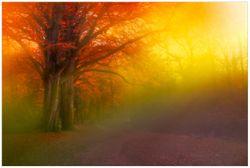 Vliestapete Bunter Herbst - Waldlandschaft bei Nebel in Regenbogenfarben – Bild 1