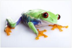 Vliestapete Lustiger Frosch in grün und orange – Bild 1
