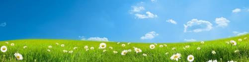 Küchenrückwand Sommerwiese - Weiße Gänseblümchen vor blauem Himmel