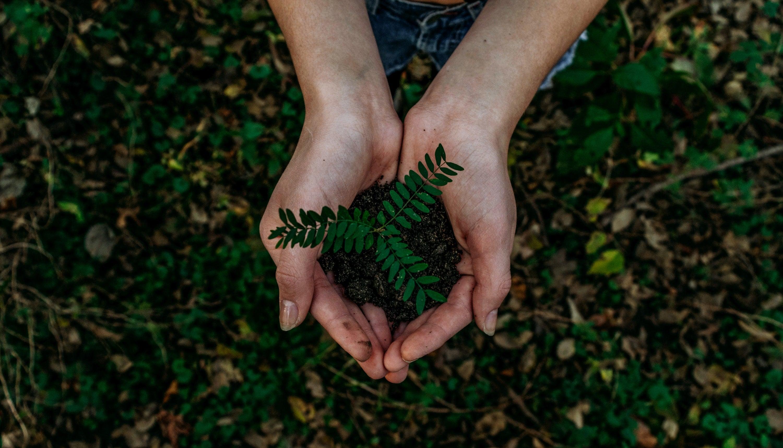 Nachhaltigkeit: Pflanze in einer Hand