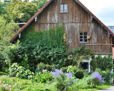 Altes Holzhaus halb zugewachsen