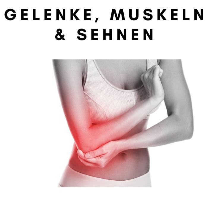 Gelenke, Muskeln & Sehnen