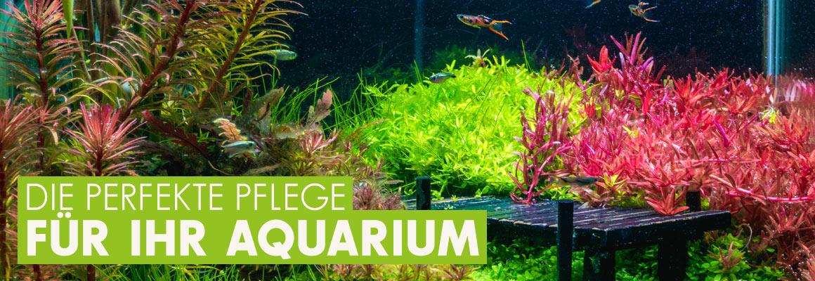 Die perfekte Pflege für Ihr Aquarium jetzt auf iPet-Shop.de