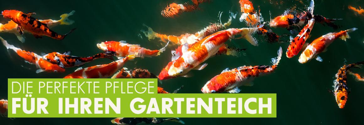 Die perfekte Pflege für Ihren Gartenteich jetzt auf iPet-Shop.de