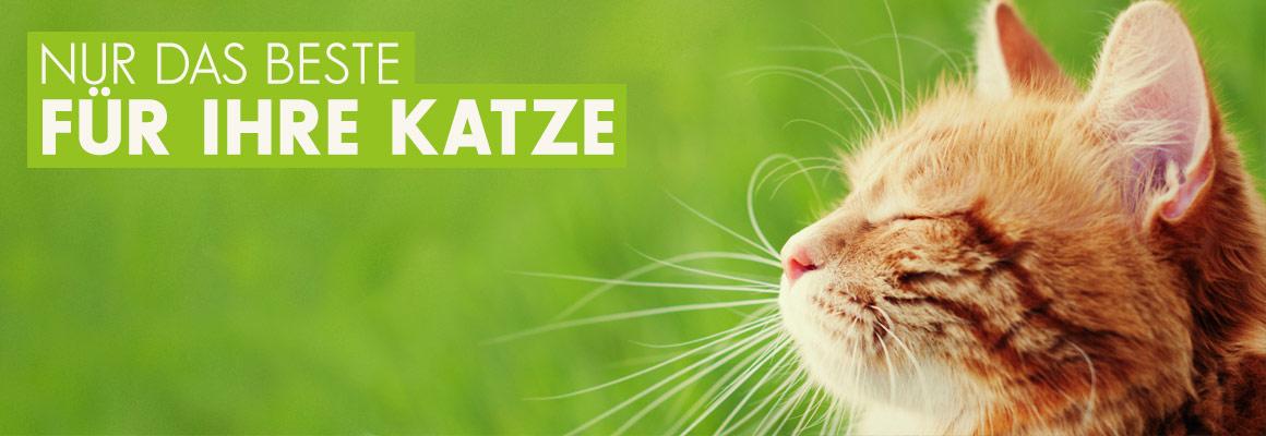 Nur das Beste für Ihre Katze jetzt auf iPet-Shop.de
