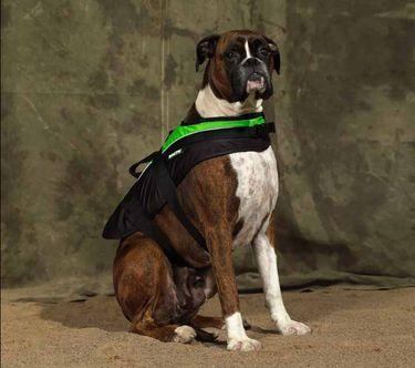 Baltic Hunde Schwimmweste Mascot grün / schwarz (Mod. 0431) – Bild 2