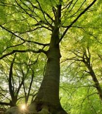 Nachhaltiges Buchenholz aus heimischem Forst