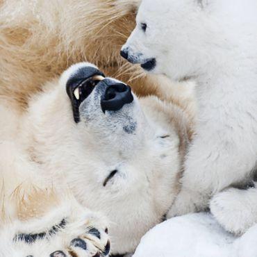 ESPiCO Bettwäsche Trendy Bedding Eisbären weiß Renforcé – Bild 4