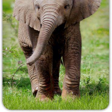 ESPiCO Bettwäsche Trendy Bedding Elefant multi Renforcé – Bild 3