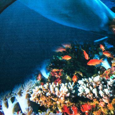 ESPiCO Strandlaken Delfin 75 x150 cm – Bild 4