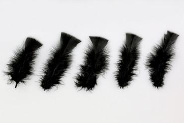 100 Federn schwarz – Bild 1