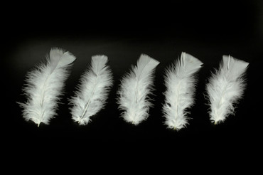 100 Federn weiß