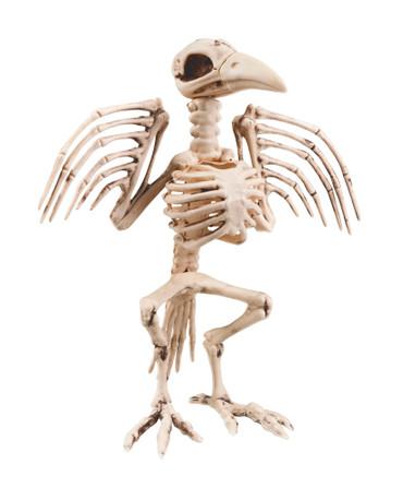 Figur Skelett Vogel