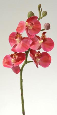Orchideenzweig rosarot