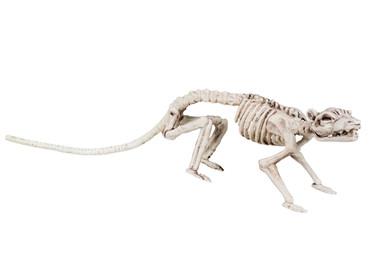 Figur Skelett Ratte