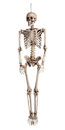 Figur Skelett de Luxe – Bild 1