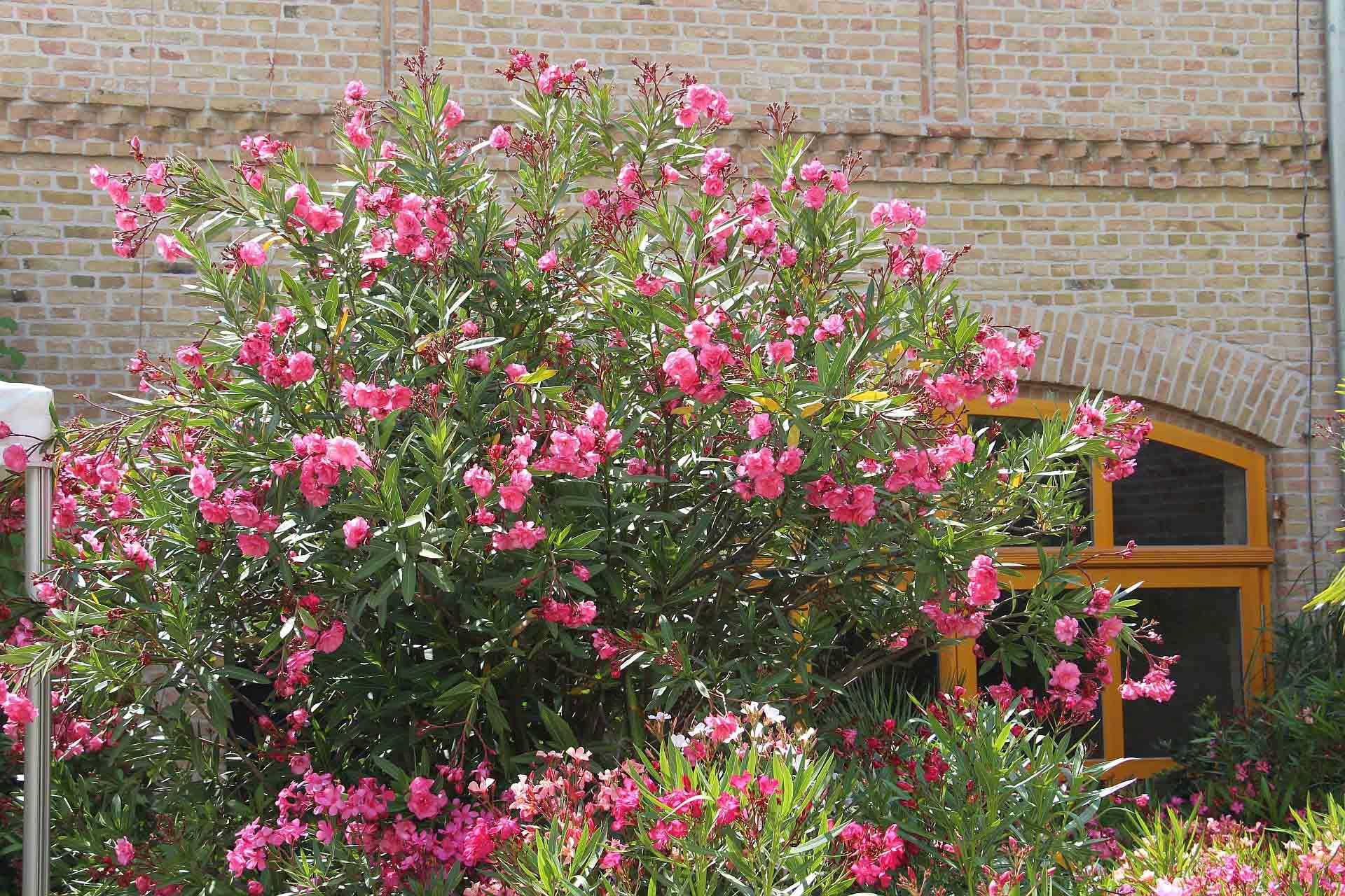 Oleanderhof Impressionen