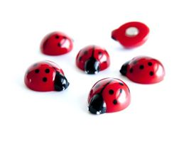Assorted Animal Style Office Magnets Lady Bugs measure 20mm x 17mm x 10mm