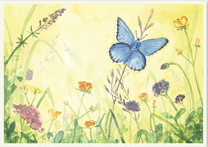Greeting Card Butterfly in the Field
