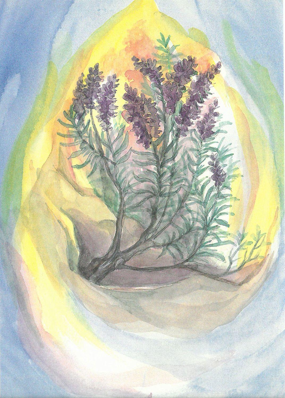 Set of 16 Postcards Wild Herbs by Margret von Borstel