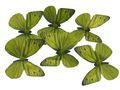 6 Schmetterlinge Grün mit Draht  1