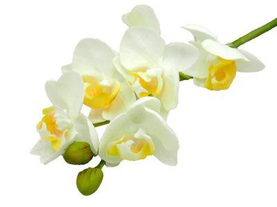 Orchidee Zweig Kunstblume Deko