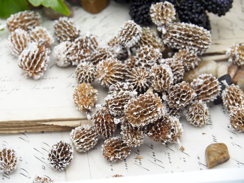 500g Zapfen Weiß Natur Deko Tischdeko Weihnachten Adventskranz Basteln