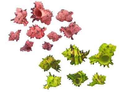 250g Muscheln Pink Grün Streudeko Basteln