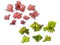 250g Muscheln Pink Grün Streudeko Maritim Basteln Deko 1