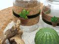 Tablett Deko Kaktus Kork Grün Natur Tischdeko Sommer Garten 2