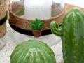Tablett Deko Kaktus Kork Grün Natur Tischdeko Sommer Garten 3